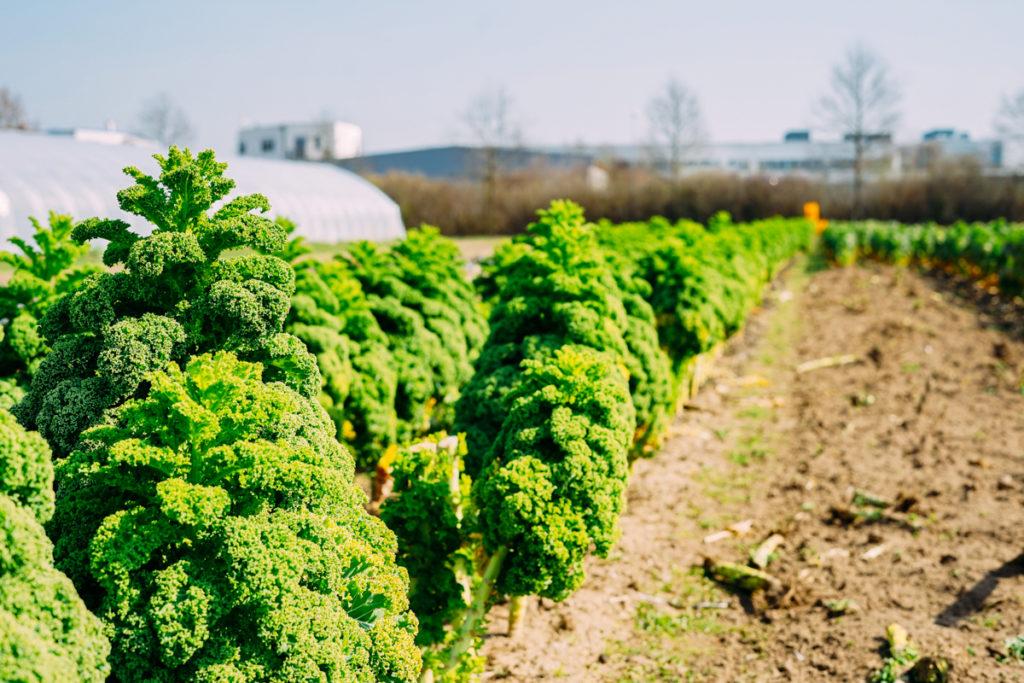 SoLawi Darmstadt Solidarische Landwirtschaft