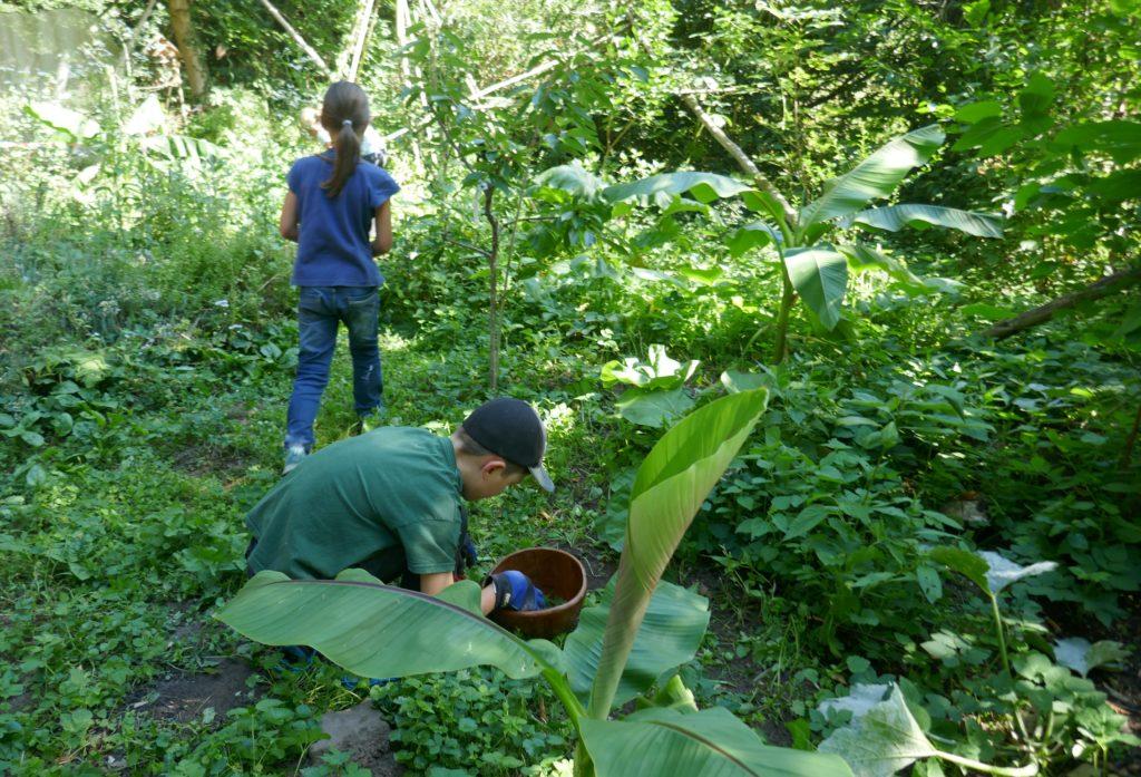 Kinder erleben den Food Forest in Darmstadt.